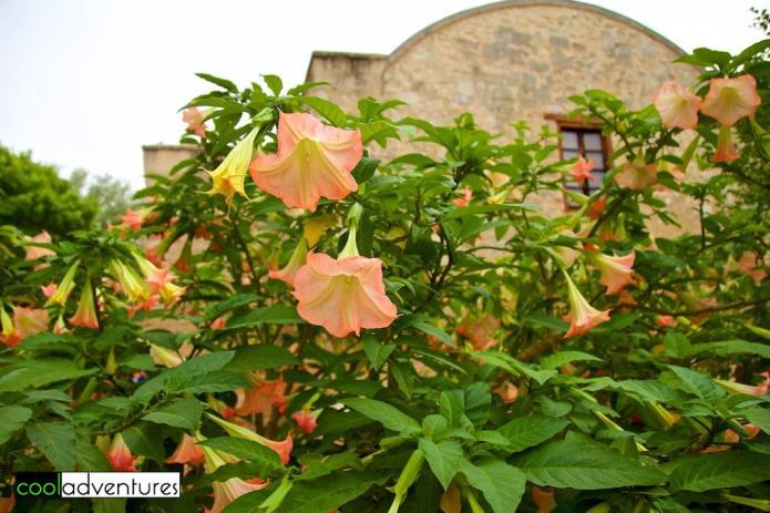 Flowers at The Alamo, San Antonio, Texas