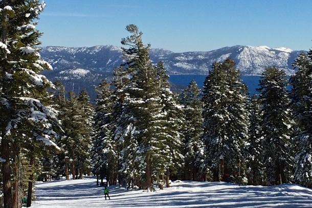 Opedix Knee Tights for skiing