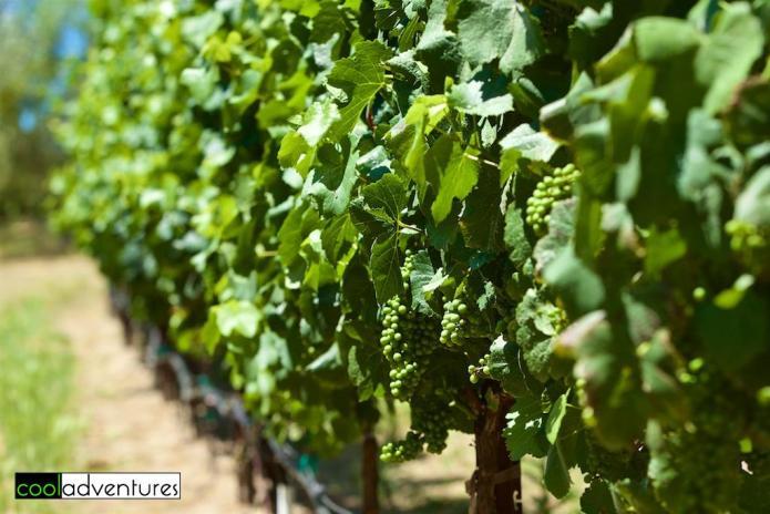 Martin Ray Vineyards and Winery, Sonoma County, California