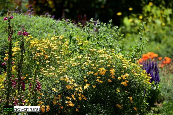 Lush landscaping at Martin Ray Winery, Sonoma County, California