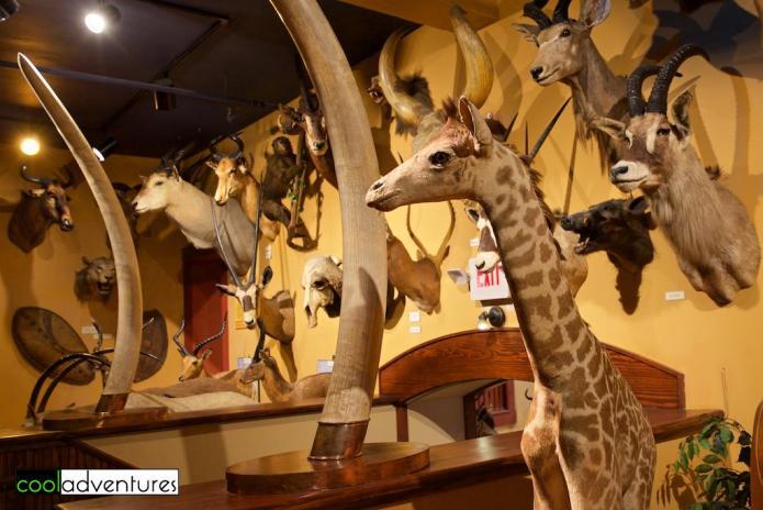 Wildlife, Buckhorn Saloon and Museum, San Antonio, Texas