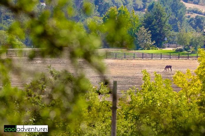 Matanzas Creek Winery, Sonoma County, California