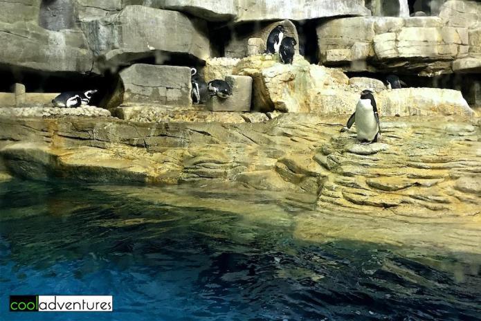 Penguins, Shedd Aquarium, Chicago, Illinois