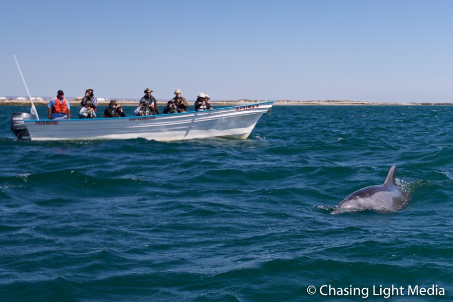 Group watching a bottlenose dolphin in Laguna San Ignacio