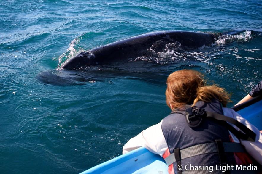 Kim Hull watches a gray whale swim past the panga, San Ignacio