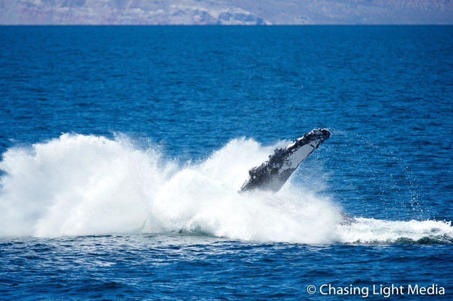 Breaching humpback whale [frame 5 - creating a splash]