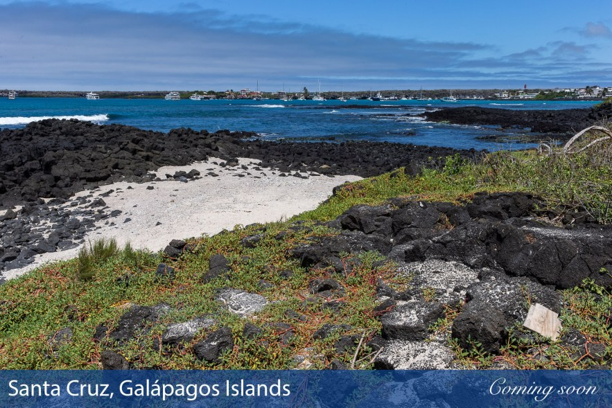 Santa Cruz, Galápagos Islands photographs taken by Chasing Light Media