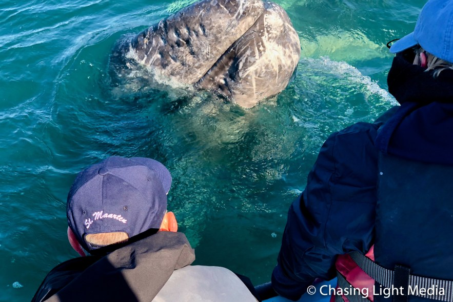 Greg Hull and Ineke Uitseest with a grey whale