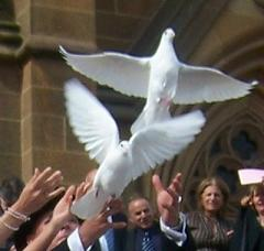 doves-and-marriage.jpg
