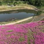 山内芝桜まつり( 秋田県横手市)へツーリング 駐車場 アクセス