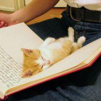 Tu as un chat? Alors ta vie doit beaucoup ressembler à ça!
