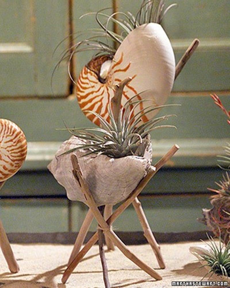 16 Adorable Seashell Craft Ideas Cool Creativities