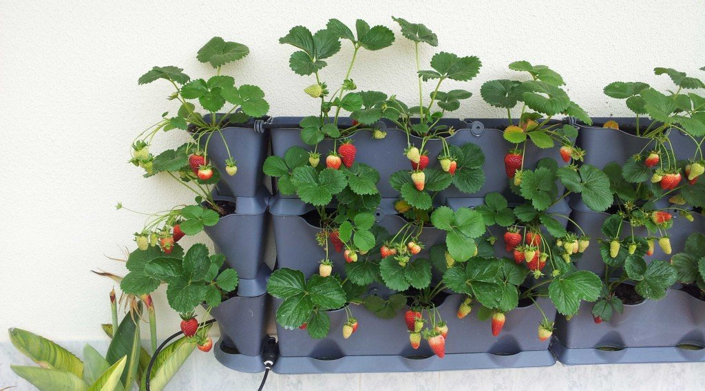 Unusual Planters Container Gardens