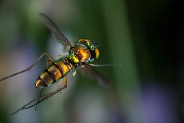 Some Magnificent Collection of Macro Photography (26)