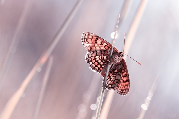 Some Magnificent Collection of Macro Photography (16)