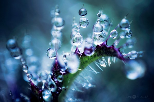 Some Magnificent Collection of Macro Photography (1)