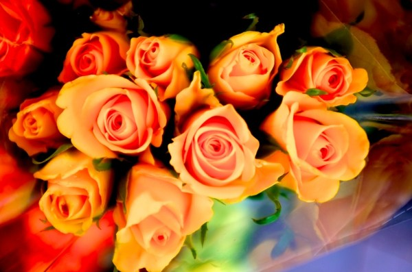Bunch of roses1