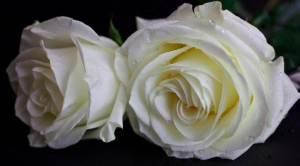 Two Beautys