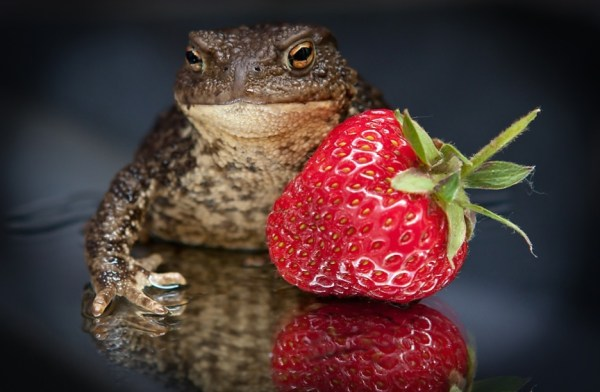 Frog and strawberry