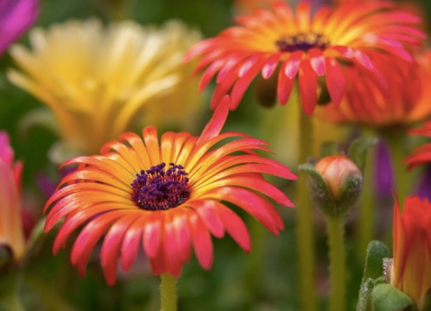 who-says-flowers-are-boring