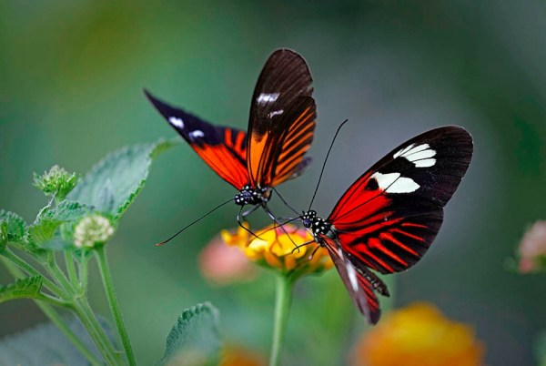 Couple of butterflys