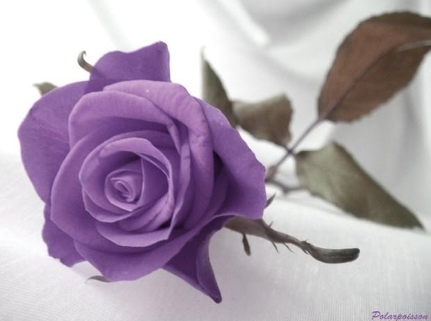 Point Rose