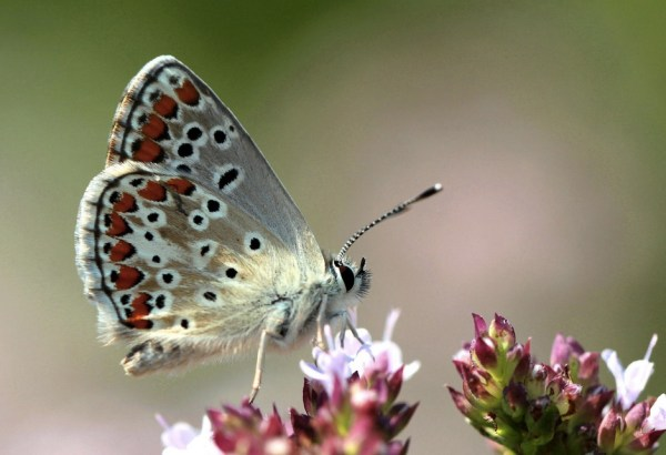 She´s A Butterfly