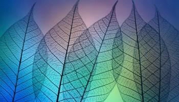 Prismatic leafs