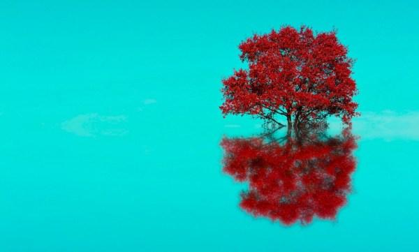 Tree reflect!