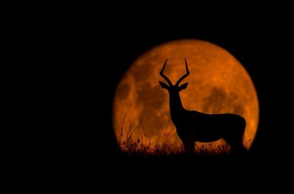 The Impala & The Moon