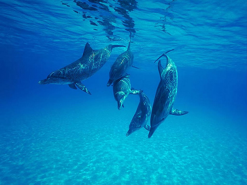 5 dolphins by Jay Ebberly