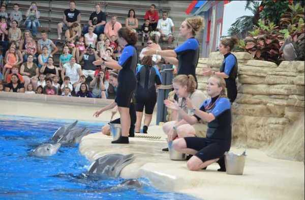 Brookfield Zoo Dolphin Show 066