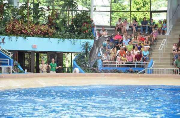 Brookfield Zoo Dolphin Show 071