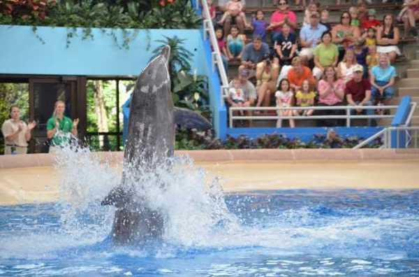 Brookfield Zoo Dolphin Show 076