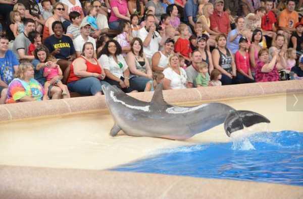 Brookfield Zoo Dolphin Show 082