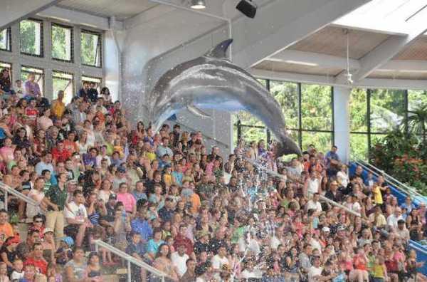Brookfield Zoo Dolphin Show 115