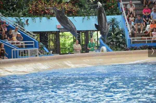 Brookfield Zoo Dolphin Show 120