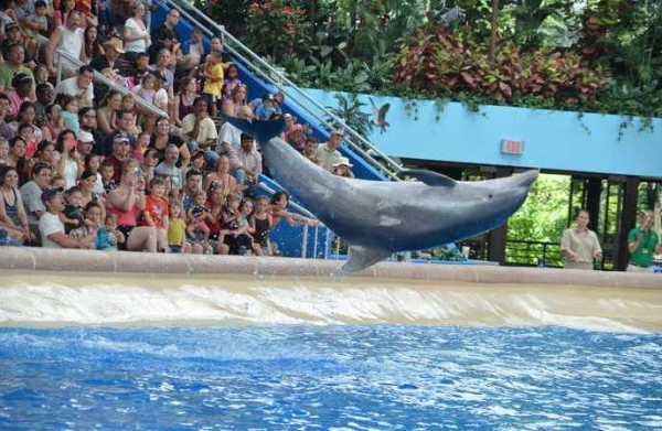 Brookfield Zoo Dolphin Show 124