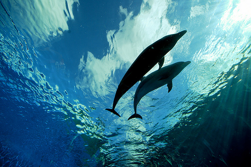 Deep Blue Dolphin Love by Patrik Jones