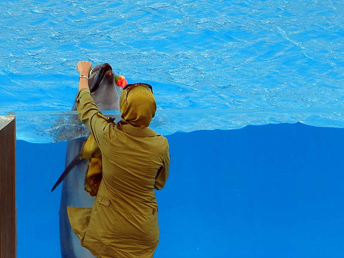 The Dolphin Gives Girl a Rose – With Love by Hamed Saber