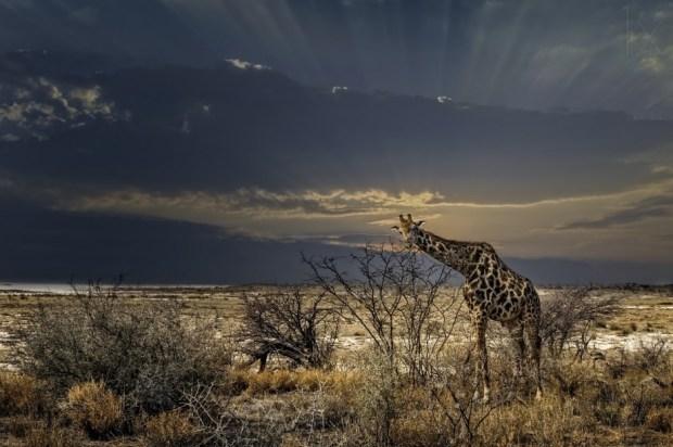sunrise in Etosha NP