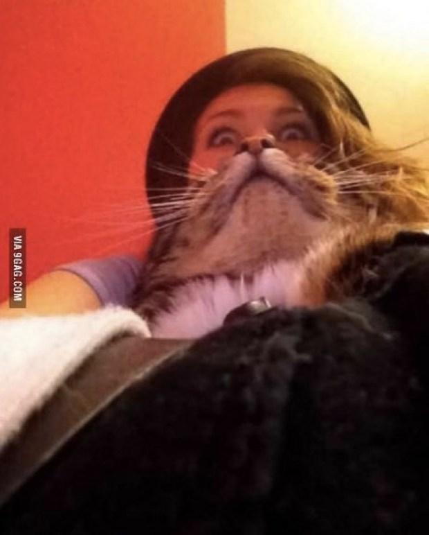 Perfect timing cat image
