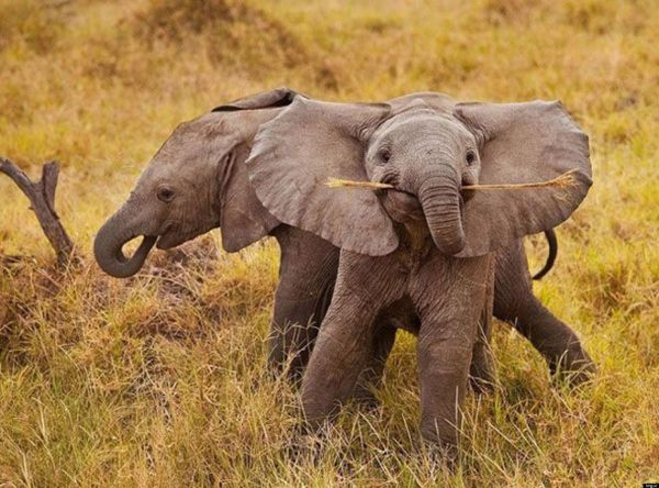 A cute baby elephant for your weekend