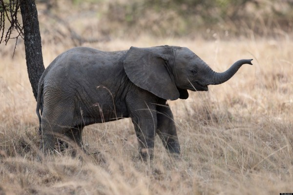 BABY-ELEPHANT-WELL-INDIA