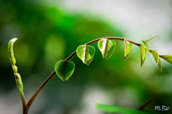 Camouflage leaf