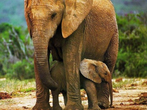 Cute Baby Elephant Picture