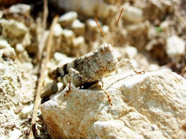 Macro Camouflage