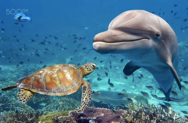 Dolphin and turtle