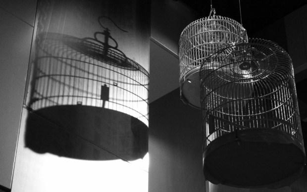 cage-shadows