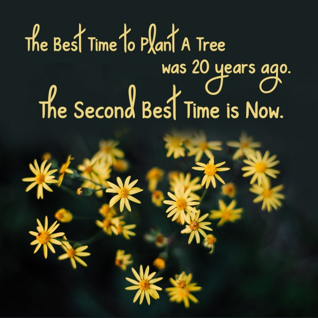 the-best-time-to-plant-a-tree-was-20-years-ago